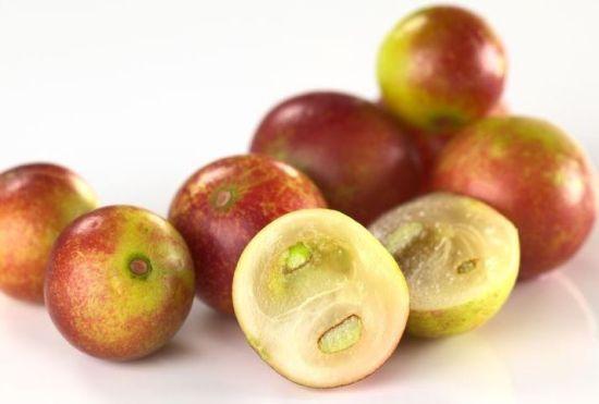 Le camu camu bio un des fruit les plus antioxydant du monde